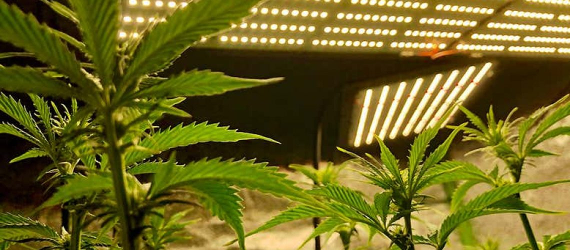 Cannabis is often grown indoors  Cappi Thompson/Getty Images    Read more: https://www.newscientist.com/article/2270366-colorados-legal-cannabis-farms-emit-more-carbon-than-its-coal-mines/#ixzz6r6DKWN3S